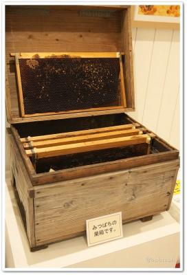 杉養蜂園_巣箱