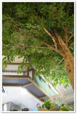 あたたかなお皿_店内の木
